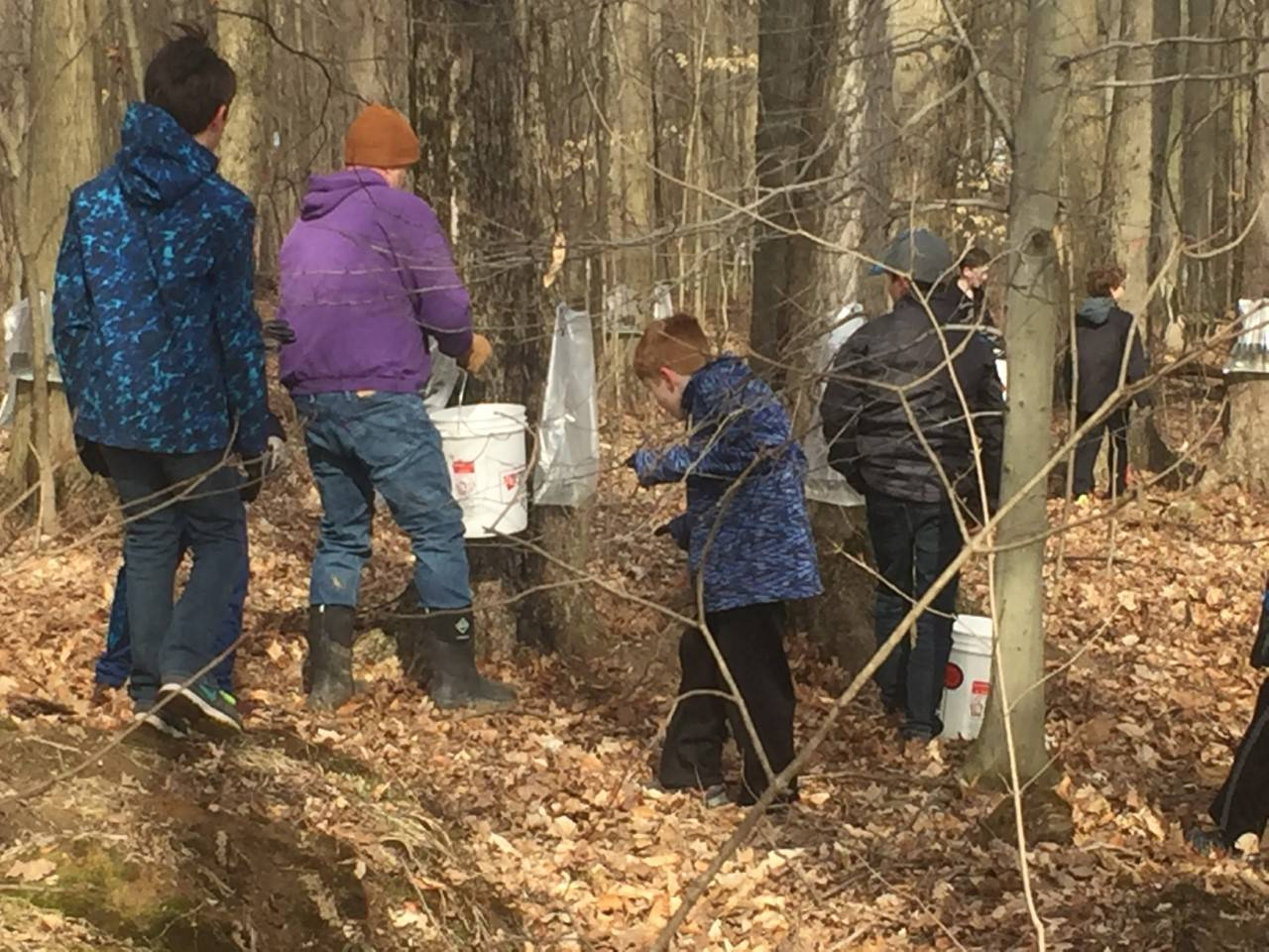 5th grade collecting sap